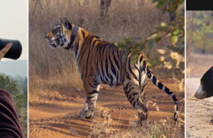 A VISIT TO THE PANNA TIGER RESERVE