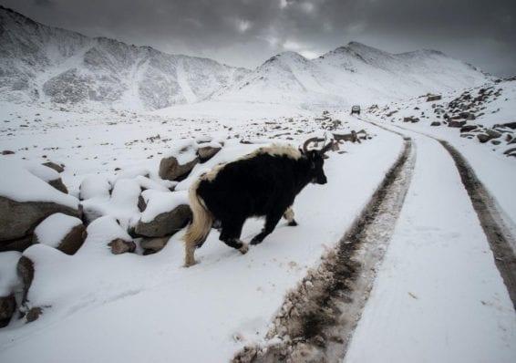 Trip to Ladakh - Photo Story