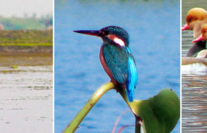 Purbasthali Ox-Bow Lake: Responsible Birdwatching Is The Need Of The Hour